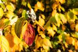 Makro Herbstblätter - 232242977