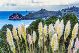Beautiful reeds along the ocean shore - 232251714