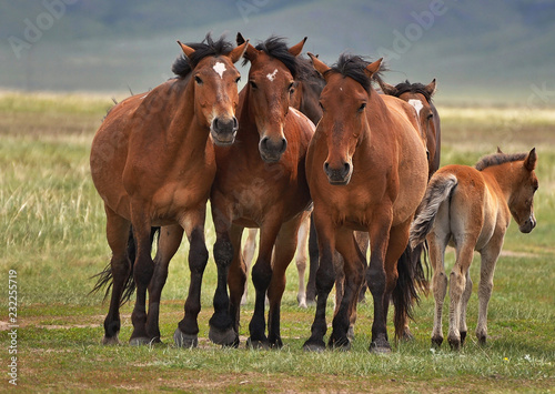 Group portrait of horses on a pasture.