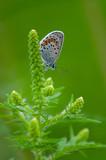farfalla ricoperta di rugiada su sfondo verde