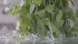 Shaking of coriander above the wet table. Slow motion - 232265788