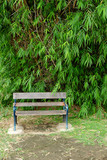 chair and bamboo tree in park