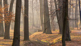 Red and colorful autumn colors in the beech forest in the fog - 232272149