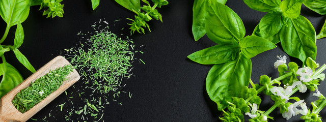 Fresh basil on a dark background. Green basil.  Food background. A lot of basil. Long banner © shintartanya