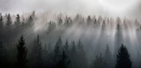 Misty morning view in wet mountain area. Pine Forests in November. - 232296169