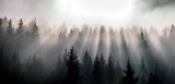 Misty morning view in wet mountain area. Pine Forests in November. - 232296177