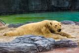 White bear in park - 232296198