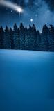 Tannenbaum im Winterwald © by-studio