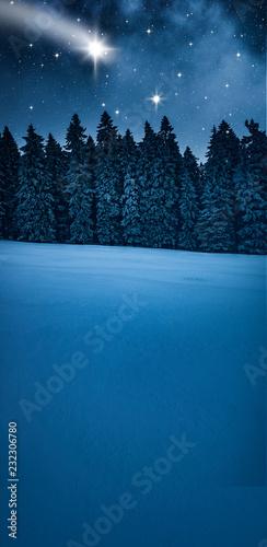Tannenbaum im Winterwald