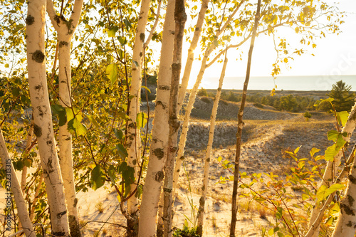 Birch trees with soft gentle wind for relaxing spa and wellness concept.