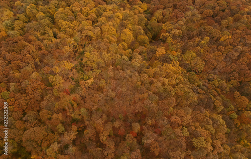 Wall mural Aerial view at the autumn forest