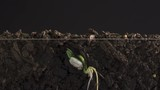 Time Lapse of seed germination and growing from underground with roots. - 232342508