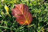осенняя листва на зелёной траве - 232349357