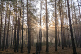 Rays of the morning sun in the misty forest - 232351798