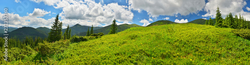 Green meadow in summer mountains - 232353760
