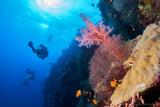 Reef Panorama - 232355505
