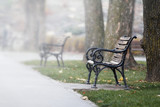 Benches on the alley in the park on a foggy morning - 232358934