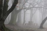 Halt in misty forest - 232361711