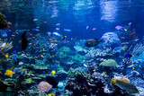Aquarium reef - 232406706