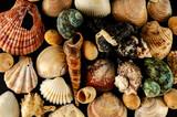 Seashell background texture - 232406769