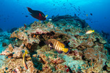 Thriving, colorful tropical coral reef, surrounded by tropical fish
