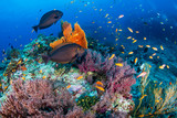 Schools of tropical fish swimming around a colorful, healthy tropical coral reef