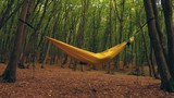 Smooth top down zoom of a hammock in the woods - 232423992