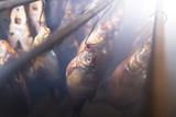 Fish smoked on hooks in smokehouse - 232428357