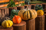 Decorative pumpkins in autumn garden - 232434732