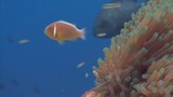 close up of fish and anemone - 232441753