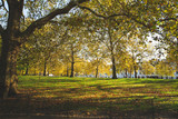 London, autumn colors on Green Park front of Buckingham Palace