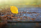 Yellow beech leaf on the on the wooden bridge in the autumn park. - 232468766