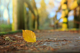 Yellow beech leaf on the on the wooden bridge in the autumn park. - 232469540