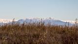 Le Canigou vu depuis l'étang de Leucate - 232471380