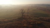 Aerial pan around lonely leafless tree and misty meadows at sunrise. - 232479358