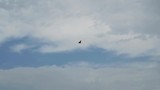 Slow motion shot of a bird hovering in a cloudy sky - 232493359