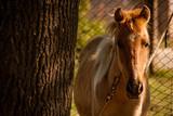 caballo atado de colores claros al lado de una planta. - 232500526