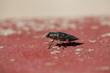 fotos de insectos varios