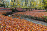Otzarreta beech forest, Gorbea Natural Park, Basque Country, Spain - 232515950