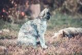 Mixed breed blue stray cat