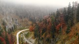 Forward Drone view of forrest in the alps in autumn - 232528521