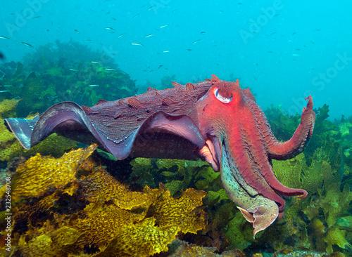 Mątwy w kelp