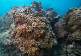 Cluster of Sarcophyton soft corals - 232559592