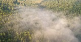 Aerial drone shot of fog over pine forest during sunrise - 232560568