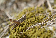 Tuscany, Italy, grasshopper rests above the moss under the sun rays