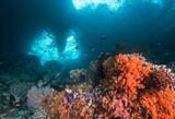 Healthy reef scene in Indonesia