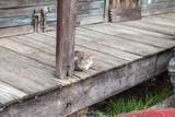 cat on a porch - 232571312