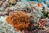 Healthy reef scene in Indonesia