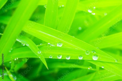 Leinwandbild Motiv waters drops on green leaves.