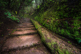 Path with stairs in Anaga rain Forest in Tenerife. - 232603177